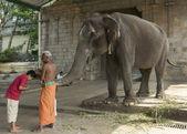 Elephant blessing at the Mahalingeswarar Temple. — Stock Photo