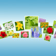 Photos of Flowers on a Blue Background — Stock Photo #59529467