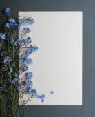 Card with fresh flowers forget-me — Stock Photo