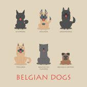 Set of belgian dogs  — Stock Vector