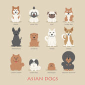 Set of asian dogs — Stock Vector