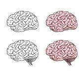 Set of isolated cartoon brains — Stock Vector