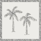 Hand drawn palm trees — Stock Vector