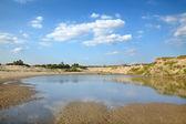 Marsh landscape — Stock Photo