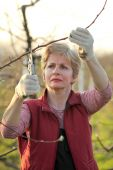 Agriculture, pruning in orchard — Stock Photo