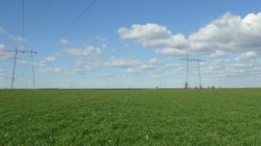 Agriculture, wheat field in spring, wind blowing — Vídeo Stock