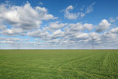 Agricultural scene, wheat field — Stock Photo