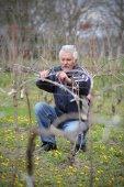 Agriculture, pruning in vineyard, senior man working — Stock Photo
