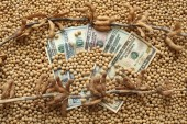 Agricultural concept, soybean and money — Stock Photo