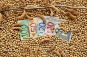 Agricultural concept, soybean and Euro money — Stock Photo