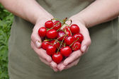 Agriculture, sweet cherry fruit in hands — Stock Photo