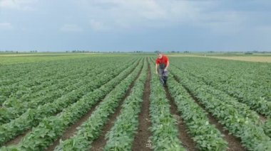 Agriculture, farmer in soybean field — Stock Video