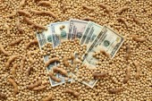 Agricultural concept, soybean and dollar money — Stock Photo