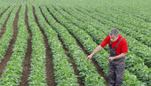 Farmer or agronomist in soy field pointing — Stock Photo