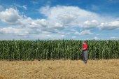 Agriculture, farmer in corn field — Stock Photo