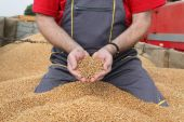 Agriculture, wheat harvest, farmer and crop — Stock Photo