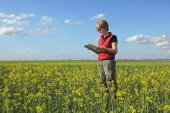Agriculture, farmer or agronomist in oilseed field — Stock Photo