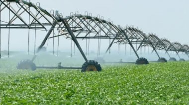 Agriculture, watering of soy bean field — Stock Video