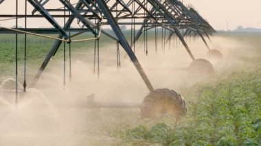 Agriculture, soy bean field watering equipment in sunset — Stock Video