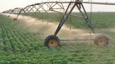 Agriculture, soybean field watering system in sunset — Stock Video