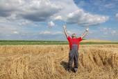 Agriculture, farmer gesture in wheat field — Stock Photo