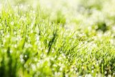 The dew in fresh grass — Stock Photo