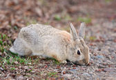 Wild Rabbit Eating — Stock Photo