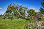 Storm Damaged Golf Course — Stock Photo