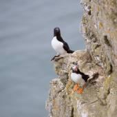 Seabirds — Stock Photo