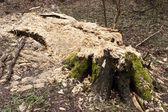 Wet rotting tree trunk — Stock Photo
