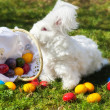 Fluffy easter angora bunny with easter eggs — Stock Photo #67987747