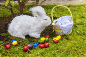 Fluffy easter angora bunny with easter eggs — Stock Photo