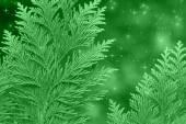 Kerstmis groene achtergrond — Stockfoto