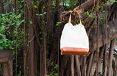 Fashion Leather Bags  hang on banyan branch — Stock Photo