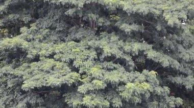 Feuilles et branches d'arbres — Vidéo
