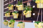 Foliage plant in pots hang on battens  — Stock Photo