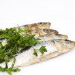 Fresh sardines with parsley leaves — Stock Photo #53843673
