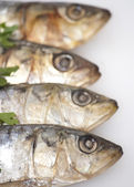 Fresh sardines on white background  — Stock Photo