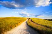 Tuscany, white road on rolling hill, rural landscape, Italy, Eur — Stock Photo