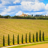 Tuscany, vineyard, cypress trees and road, rural landscape, Ital — Stock Photo