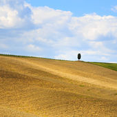 Tuscany, cypress tree on hill and fields. Siena Orcia, Italy. — Stock Photo