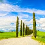 Tuscany, Cypress Trees white road rural landscape, Italy, Europe — Stock Photo #57327383