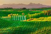 Tuscany, spring rural landscape. Countryside farmland and mounta — Stock Photo