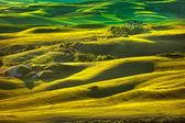 Tuscany spring, rolling hills on sunset. Volterra rural landscap — Stock Photo
