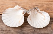 Sea shells on old wooden background — Stockfoto