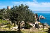 橄榄树和成堆的酒店 — 图库照片
