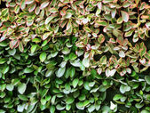 Leaves wall background — Stock Photo