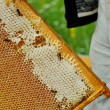 Worker Bees on Honeycomb — Stock Photo #54744213