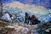 Mountain landscape in autumn morning with horses climbing on roa — Stockfoto