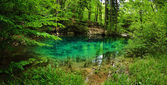 Beautiful pond in the woods — Stock Photo
